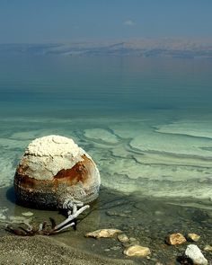 Dead Sea?. Oh my dog! I am terribly sorry. How was it? I didn't even know it was sick. Doctors must be right when they say that too much salt is not healthy.