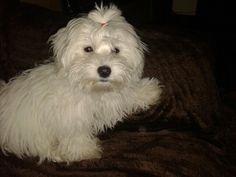 #my #dog #Magia #my #little #princess #loveeee ♥