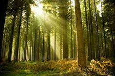 #Foresta #Garbelotto & #Masterfloor #Ecocompatibili
