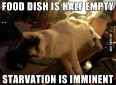 Starvation is imminent