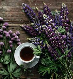Люпины из сада💜 Хорошего дня __________ Lupins from my garden💜 Have a good day! Coffee Flower, Garden Coffee, Gardenias, Coffee Pictures, Good Morning Flowers, Coffee Photography, Garden Pictures, Flower Aesthetic, Coffee Cafe