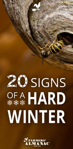 What signs from nature did our ancestors watch to predict what was to come? From wasps nests to spider webs to acorns, check out these folklore signs that predict a hard winter. Are you seeing any of these in your back yard? Emergency Preparation, Emergency Preparedness, Survival Kits, Homesteaders Life, Weather Predictions, First Day Of Winter, Wasp Nest, Old Farmers Almanac, Living Off The Land