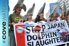 Cove 101: A Primer on Taiji, Japan's Senseless Dolphin Slaughter