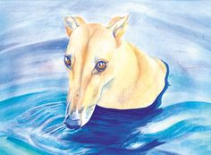 """Essie Swims"" - watercolor Greyhound Art, Whippet, Dog Art, Essie, Art Pieces, Portraits, Watercolor, Pets, Artwork"