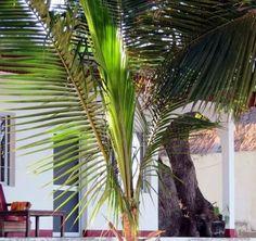 bungalow sur la plage hotel IKOTEL Ifaty Mangily MADAGASCAR www.ikotel-tulear.com