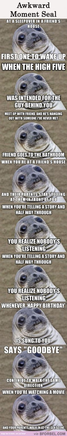 9 Awkward Moments You Have In Common With This Seal…