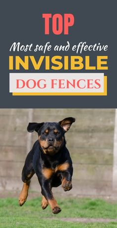 When dogs are determined enough to leave the yard, and aren't trained to, they can run off and get into all sorts of trouble. This is why pet owners need to find the best wireless dog fence. Training Your Dog, Training Tips, Invisible Fence, Wireless Dog Fence, Dog Anxiety, Pet Dogs, Pets, Dog Care Tips, Pet Life
