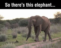 It's so sad when you go to Africa and see fences . Most animals (and elephants) can't cross them.