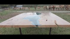 river table, field & cows