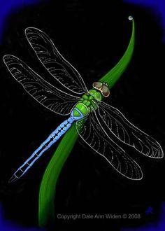 ACEO Dragonfly Art Print. $7.00, via Etsy.