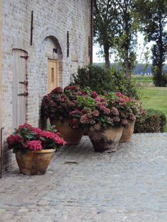 extreme example of using large containers to define space - trio of identical hydrangeas makes a partition