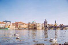 les cygnes du Pont Charles Pont Charles, Paris Skyline, Louvre, Building, Travel, Visit Prague, Viajes, Buildings, Destinations