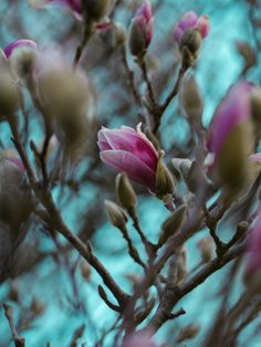 12 Impressive Spring Wreaths Appearance Shallow Focus Photography Of Pink Flowers Flower Images, Flower Pictures, Teal Image, Teal Wallpaper, Free High Resolution Photos, Focus Photography, Free Instagram, Magnolia Flower, Winter Garden