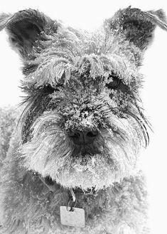 Cute dogs || Snow Fun ~ Photos Hub Cute Pets