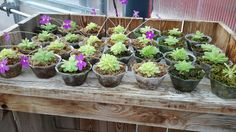 These little Butterworts are meat eaters. Carnivorous plants that just need to keep moist.