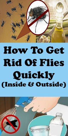 Fantastic cleaning tips hacks are offered on our internet site. look at this and you wont be sorry you did. Keep Flies Away, Get Rid Of Flies, How To Repel Flies, Deep Cleaning Tips, Natural Cleaning Products, Cleaning Hacks, Cleaning Solutions, Home Remedies For Flies, House Fly Traps