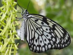 Everyone is familiar with butterflies, but how much do you really know about these insects? Discover 10 interesting facts about butterflies. Butterfly Facts, Butterfly Photos, Monarch Butterfly, Butterfly Feeder, Butterfly Species, 10 Interesting Facts, Fascinating Facts, Bug Art, A Bug's Life