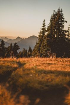 Golden Hour at Olympic National Park Washington [OC] get your photography kit now # affiliate Cinematic Photography, Dark Photography, National Photography, Winter Photography, Amazing Photography, Travel Photography, Creative Photography, Photography Ideas, Nature Story