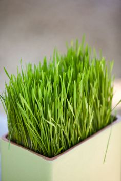 What's more simple than growing grass? Seriously, I could grow you as many containers full of grass as you want.