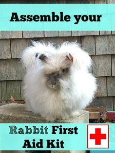 Rabbit First Aid Kit - The Cape Coop