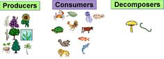 Some Parts of the Food Chain: Producers, Consumers, Decomposers