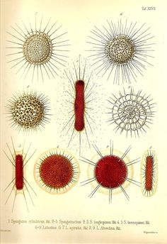 Ernst Haeckel OCEAN Lithograph Art Print by NaturalistCollection, $5.00