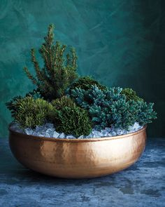 Even outdoor plants can benefit from some indoor treatment at times. Instead of a boring terra cotta pot, try placing conifers in a large brass bowl. The icelike mulch elevate the grouping even more.