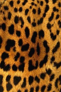 Cheetah Pictures To Print | Cheetah Print iphone wallpaper