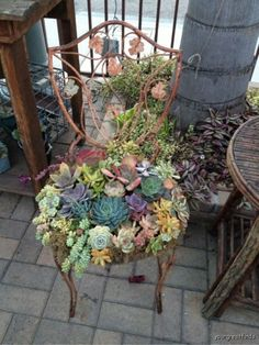 Vintage iron patio chair repurposed into colorful succulent garden planter at Estate ReSale & ReDesign, Bonita Springs, FL