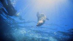 Kaikoura - 2.5 hour Seal Swim - $65-110