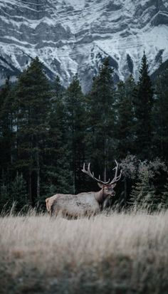 Deer Paintings, Thoughts, Mountains, Nature, Photography, Travel, Naturaleza, Photograph, Viajes