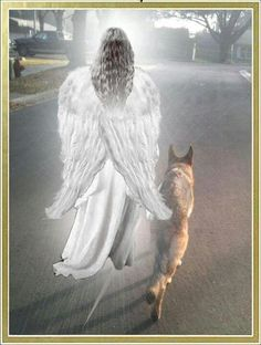 God doesn't want our dogs to be alone on their journey to Heaven so He sends an Angel to keep them company and show them the way to the Rainbow Bridge. God loves our dogs even more than we do. Love My Dog, All Dogs, Dogs And Puppies, Doggies, Animals And Pets, Cute Animals, Pet Loss Grief, Amor Animal, Tier Fotos