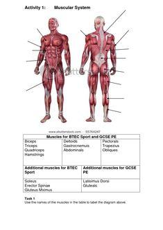 Human Body Internal Organ Diagram Human Anatomy Drawing Pinterest