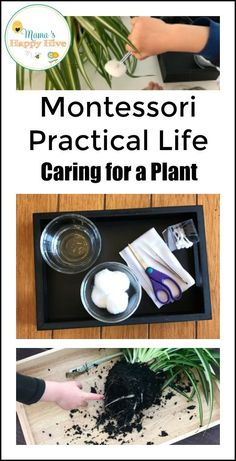 This practical life activity teaches a young child how to gently care for a delicate living plant. The child develops empathy and compassion for the plant. - www.mamashappyhive.com Montessori Toddler, Montessori Activities, Toddler Learning, Educational Activities, Toddler Activities, Montessori Homeschool, Montessori Practical Life, Montessori Materials, Home Learning