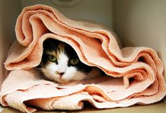 10 Items to Donate to Animal Shelters