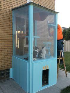 Cat Castle, Cat Health Care, Outdoor Cat Enclosure, Kennel Ideas, Cat Run, Outdoor Cats, Animal Projects, Catio, Cat Furniture