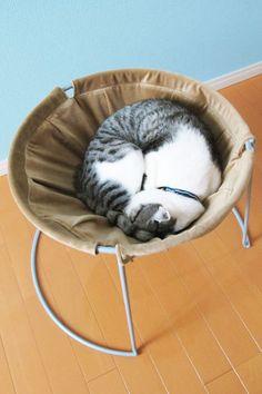 Cat Hammock/キャットハンモック - Tamanegi-kobo #cat #furniture - Learn more about cat…