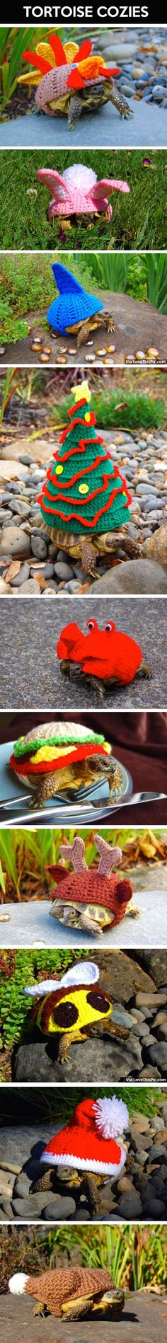 Tortoise Cozies Pictures, Photos, and Images for Facebook, Tumblr, Pinterest, and Twitter