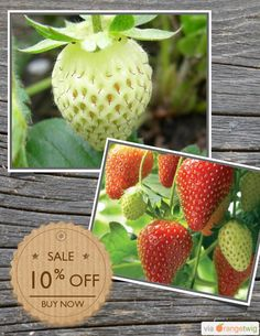 10% OFF on select products. Hurry, sale ending soon! Check out our discounted products now: https://orangetwig.com/shops/AAAibxW/campaigns/AABufU4?cb=2015012&sn=CaribbeanGarden&ch=pin&crid=AABue0l