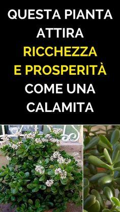 Questa pianta attira ricchezza e prosperità come una calamita! E' uno dei motivi per cui dovremmo averla in casa!