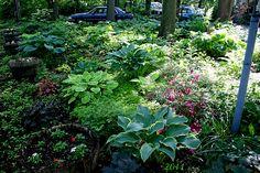 My Shade Garden!