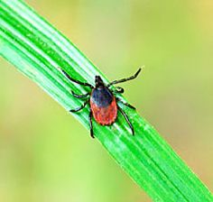 Symptoms of Lyme disease vary case-by-case, and doxycyclline doesn't always cure Lyme. Here's the top misconceptions some people--and doctors--have about Ly