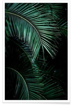 Palm Leaves 9 als Premium poster door Mareike Böhmer Tropical Leaves, Tropical Plants, Theme Nature, Photo Deco, Leaf Photography, Palm Trees Beach, Poster Online, Art Prints Online, Image House