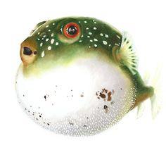 Puffer Fish by ABunnyandBear, Original Art Print Animal Illustration $20.00 @kkdcalgary