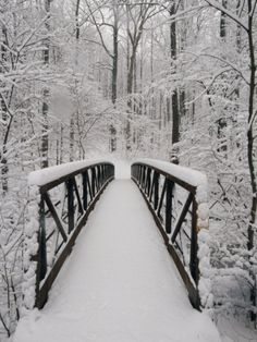 A View of a Snow-Covered Bridge in the Woods Photographic Print by Richard Nowitz at AllPosters.com