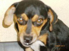 ORELHA Dogs, Animals, Pet Adoption, Ear, Animales, Animaux, Doggies, Animal, Animais