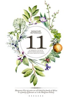 Signature Botanicals designed by Brand Tree. maybe something like this, with local plants used in process and simple logo in middle Layout Design, Design Art, Poster Design Inspiration, Poster Ideas, Flyer, Grafik Design, Botanical Art, Watercolor Illustration, Packaging Design
