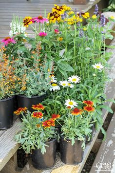 Tips for planting Perennial Flowers | Creative Cain Cabin