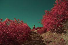 infrared-danielle-griffith-park.jpg (980×650)