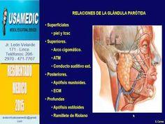 anatomia de la prostata coscarelli
